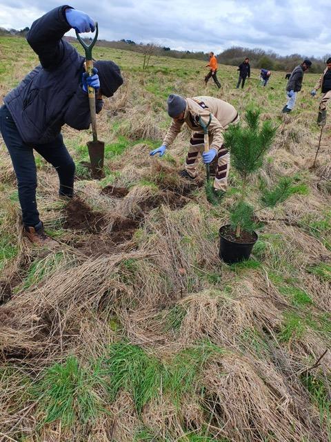 805 Trees planted by DSS volunteers in Birmingham