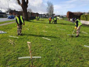Tree Planting in UK